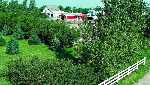 Kansas Forest Service, trees bordering farm