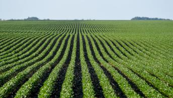 Image result for iowa soybean association