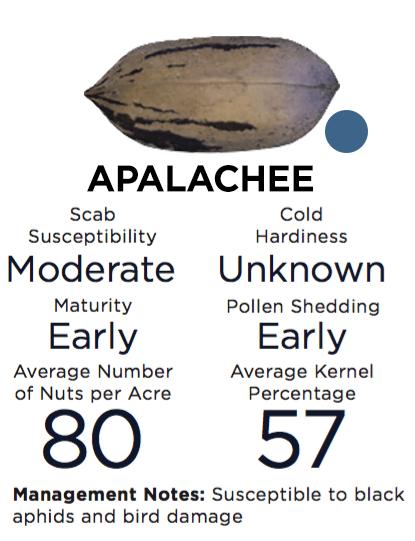 Apalachee