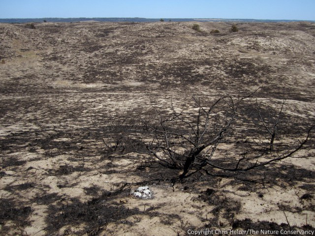 Sandhills grassland that was burned in a wildfire in 2012. Photo copyright Chris Helzer/The Nature Conservancy.