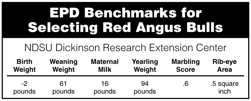 EPD Benchmarks for Selecting Red Angus Bulls