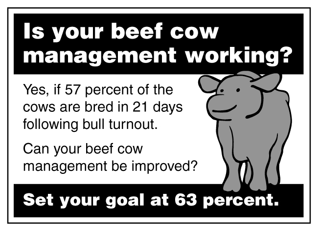 Is your beef cow management working?